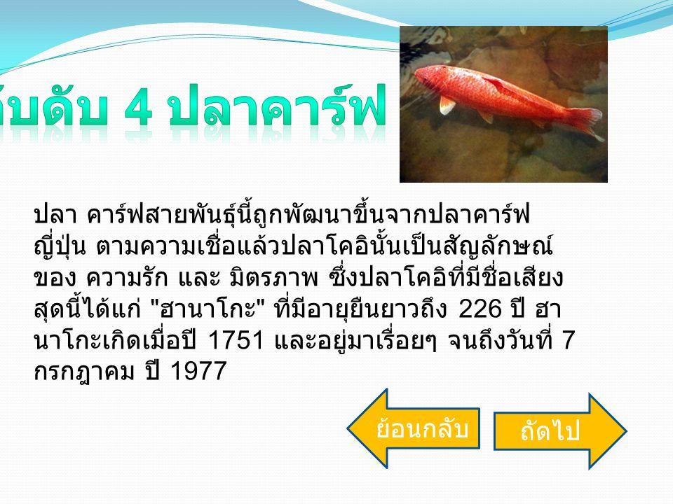 ปลา คาร์ฟสายพันธุ์นี้ถูกพัฒนาขึ้นจากปลาคาร์ฟ ญี่ปุ่น ตามความเชื่อแล้วปลาโคอินั้นเป็นสัญลักษณ์ ของ ความรัก และ มิตรภาพ ซึ่งปลาโคอิที่มีชื่อเสียง สุดนี้