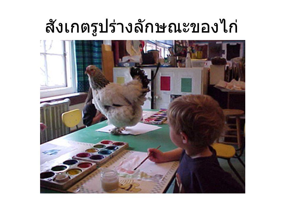 แสดงผลงานที่ได้เรียนรู้เกี่ยวกับไก่ ให้ผู้ปกครองชม