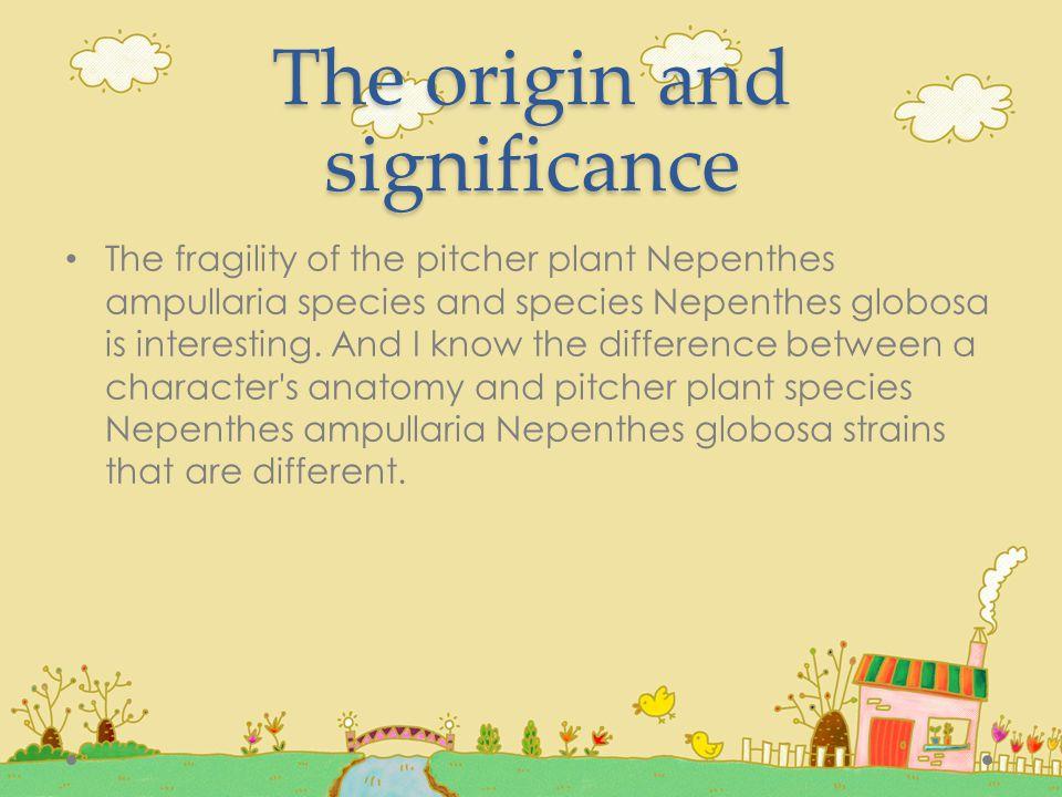 ศึกษาเกี่ยวกับกระเปราะของหม้อข้าวหม้อแกงลิง สายพันธุ์ Nepenthes ampullaria และ สายพันธุ์ Nepenthes globosa โดยการศึกษาลักษณะกาย วิภาควิทยา เพื่อเปรียบเทียบโครงสร้าง ของกระเปราะหม้อข้าวหม้อแกงลิงสายพันธุ์ Nepenthes ampullaria และ สายพันธุ์ Nepenthes globosa