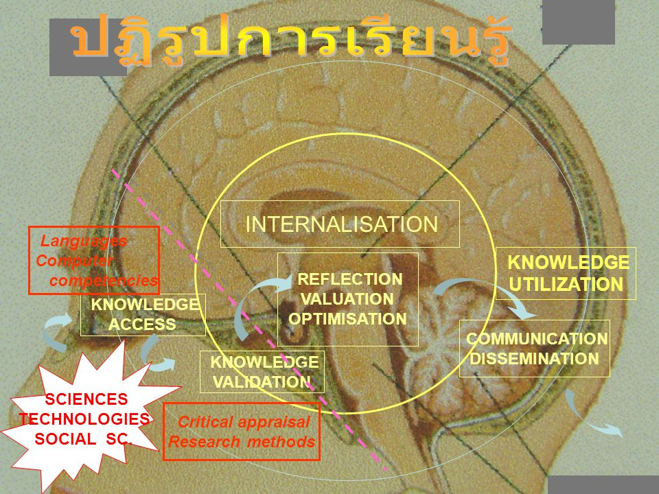 KNOWLEDGE ACCESS KNOWLEDGE VALIDATION INTERNALISATION REFLECTION VALUATION OPTIMISATION COMMUNICATION DISSEMINATION Languages Computer competencies Cr