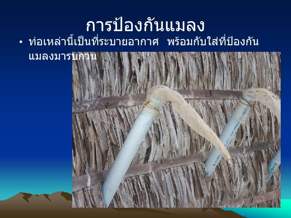 การป้องกันแมลง ท่อเหล่านี้เป็นที่ระบายอากาศ พร้อมกับใส่ที่ป้องกัน แมลงมารบกวน
