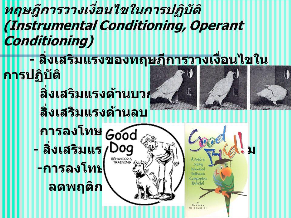 ทฤษฎีการวางเงื่อนไขในการปฏิบัติ (Instrumental Conditioning, Operant Conditioning) - สิ่งเสริมแรงของทฤษฎีการวางเงื่อนไขใน การปฏิบัติ สิ่งเสริมแรงด้านบวก สิ่งเสริมแรงด้านลบ การลงโทษ - สิ่งเสริมแรง ( บวก ลบ ) เพิ่มพฤติกรรม - การลงโทษ ลดพฤติกรรม