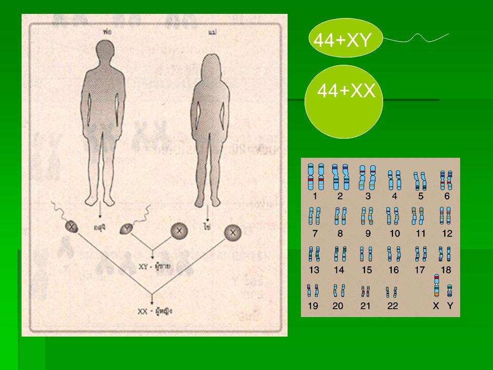 44+XY 44+XX