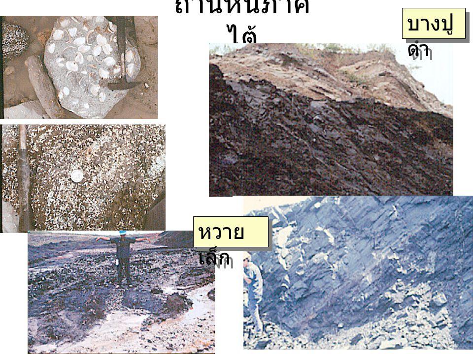 ถ่านหินภาค ไต้ บางปู ดำ หวาย เล็ก