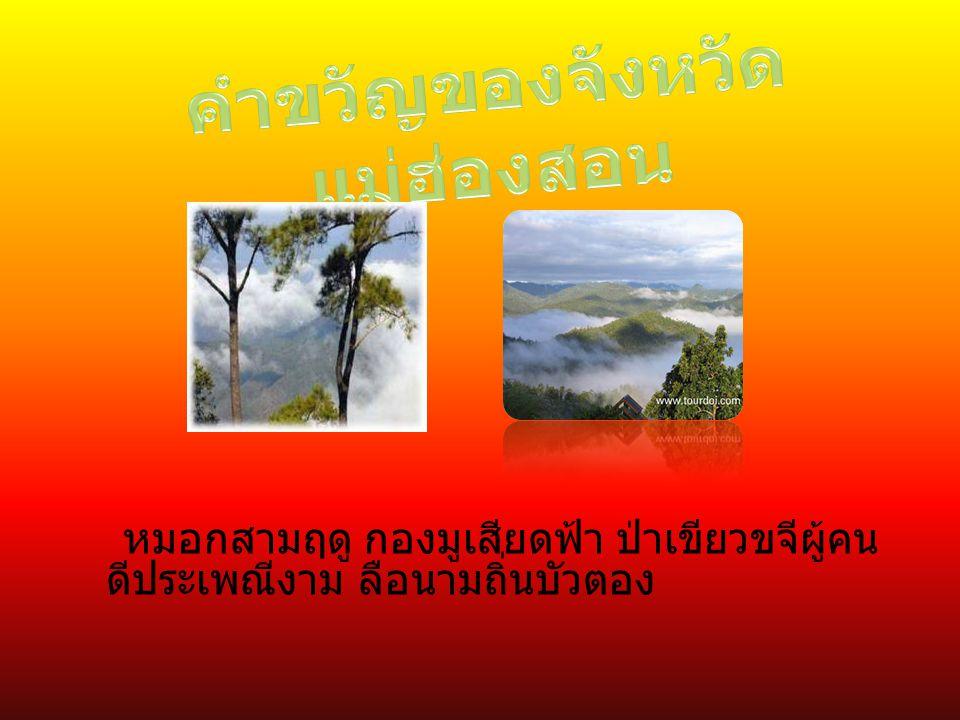 หมอกสามฤดู กองมูเสียดฟ้า ป่าเขียวขจีผู้คน ดีประเพณีงาม ลือนามถิ่นบัวตอง