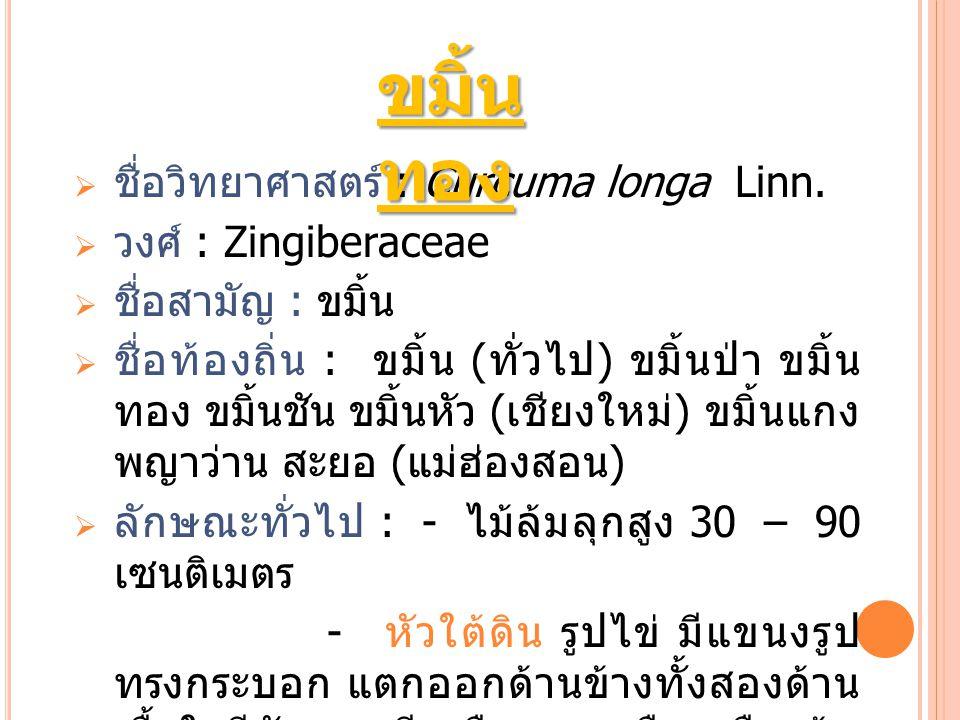  ชื่อวิทยาศาสตร์ : Curcuma longa Linn.  วงศ์ : Zingiberaceae  ชื่อสามัญ : ขมิ้น  ชื่อท้องถิ่น : ขมิ้น ( ทั่วไป ) ขมิ้นป่า ขมิ้น ทอง ขมิ้นชัน ขมิ้น