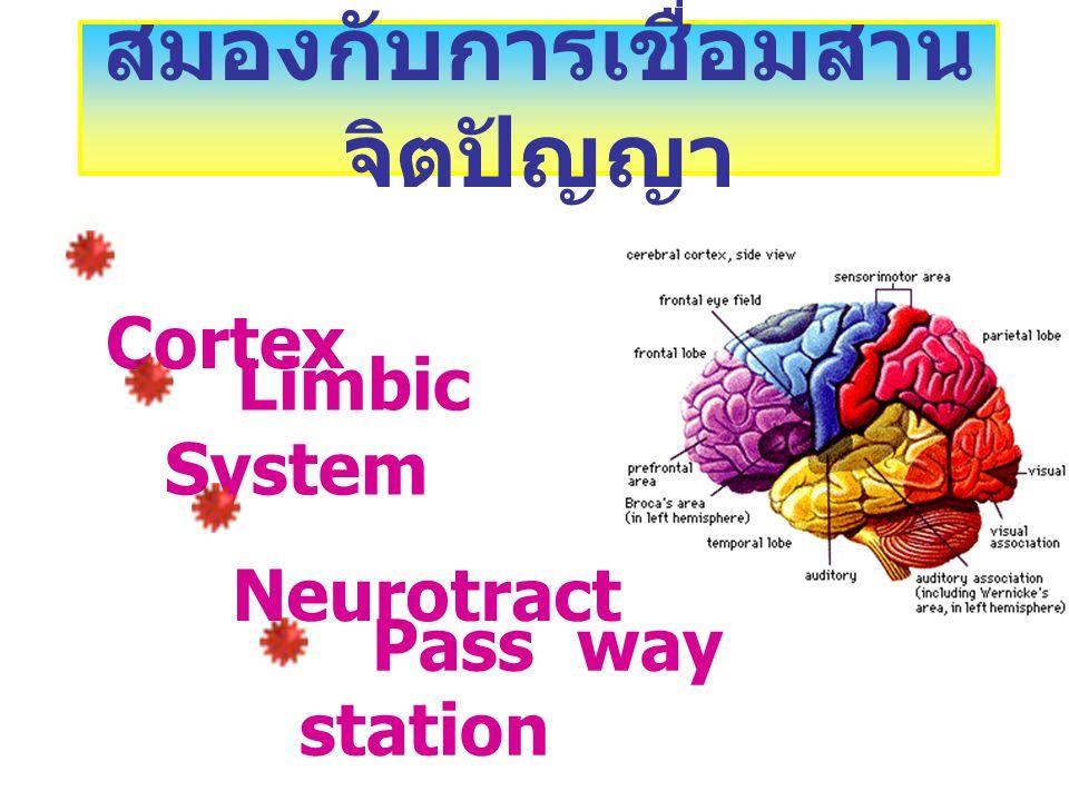 Frontal Lobe Limbic System Corte x Limbic System