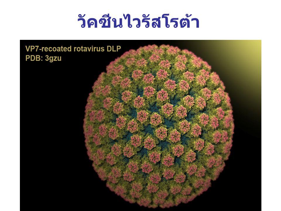 วัคซีนไวรัสโรต้า