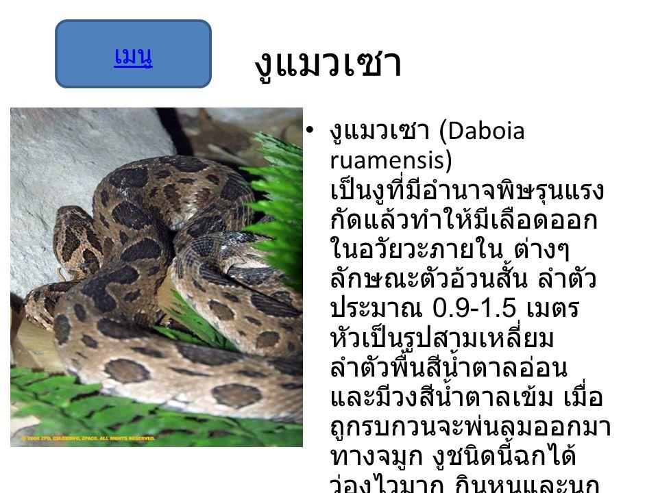 งูแมวเซา งูแมวเซา (Daboia ruamensis) เป็นงูที่มีอำนาจพิษรุนแรง กัดแล้วทำให้มีเลือดออก ในอวัยวะภายใน ต่างๆ ลักษณะตัวอ้วนสั้น ลำตัว ประมาณ 0.9-1.5 เมตร