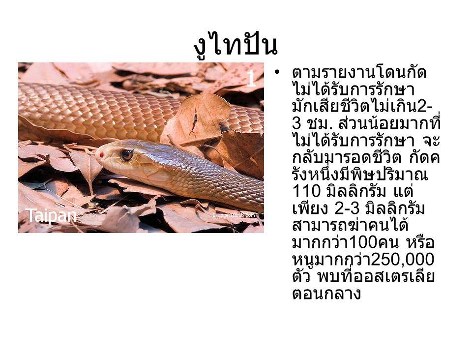 งูไทปัน ตามรายงานโดนกัด ไม่ได้รับการรักษา มักเสียชีวิตไม่เกิน 2- 3 ชม. ส่วนน้อยมากที่ ไม่ได้รับการรักษา จะ กลับมารอดชีวิต กัดค รังหนึ่งมีพิษปริมาณ 110