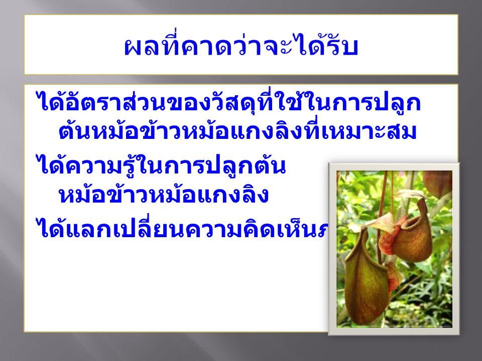 ได้อัตราส่วนของวัสดุที่ใช้ในการปลูก ต้นหม้อข้าวหม้อแกงลิงที่เหมาะสม ได้ความรู้ในการปลูกต้น หม้อข้าวหม้อแกงลิง ได้แลกเปลี่ยนความคิดเห็นภายในกลุ่ม