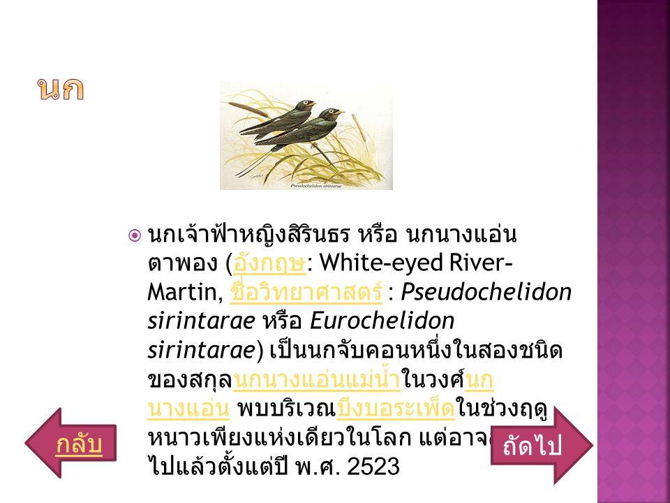  นกเจ้าฟ้าหญิงสิรินธร หรือ นกนางแอ่น ตาพอง ( อังกฤษ : White-eyed River- Martin, ชื่อวิทยาศาสตร์ : Pseudochelidon sirintarae หรือ Eurochelidon sirintarae) เป็นนกจับคอนหนึ่งในสองชนิด ของสกุลนกนางแอ่นแม่น้ำในวงศ์นก นางแอ่น พบบริเวณบึงบอระเพ็ดในช่วงฤดู หนาวเพียงแห่งเดียวในโลก แต่อาจสูญพันธุ์ ไปแล้วตั้งแต่ปี พ.