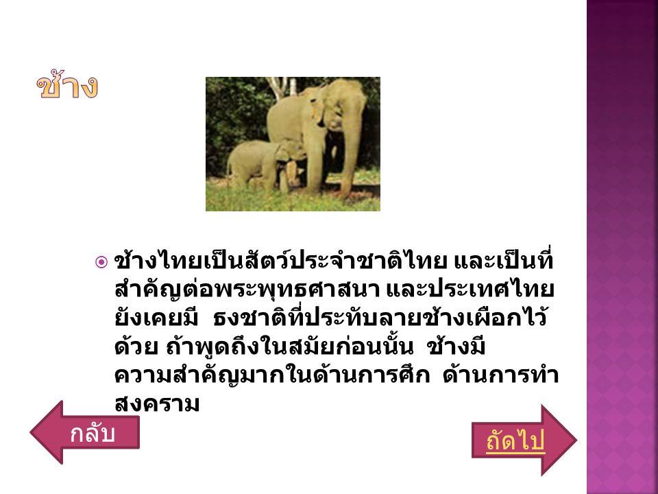  ช้างไทยเป็นสัตว์ประจำชาติไทย และเป็นที่ สำคัญต่อพระพุทธศาสนา และประเทศไทย ยังเคยมี ธงชาติที่ประทับลายช้างเผือกไว้ ด้วย ถ้าพูดถึงในสมัยก่อนนั้น ช้างมี ความสำคัญมากในด้านการศึก ด้านการทำ สงคราม ถัดไป กลับ