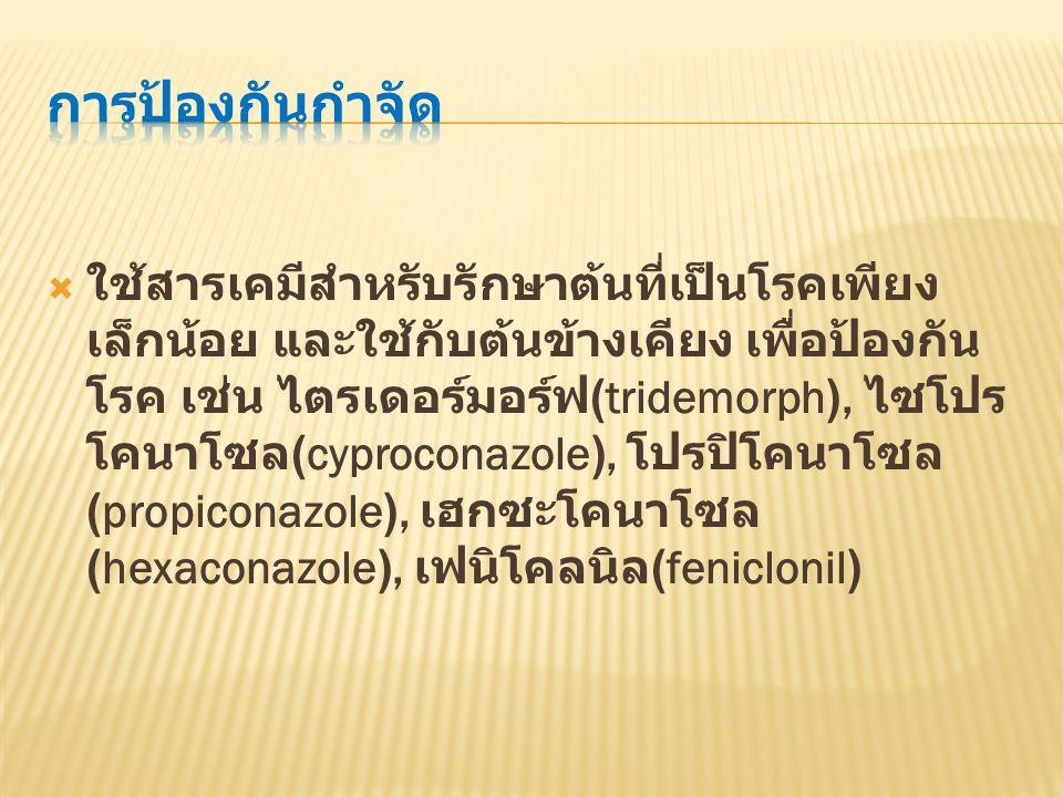  ใช้สารเคมีสำหรับรักษาต้นที่เป็นโรคเพียง เล็กน้อย และใช้กับต้นข้างเคียง เพื่อป้องกัน โรค เช่น ไตรเดอร์มอร์ฟ (tridemorph), ไซโปร โคนาโซล (cyproconazole), โปรปิโคนาโซล (propiconazole), เฮกซะโคนาโซล (hexaconazole), เฟนิโคลนิล (feniclonil)