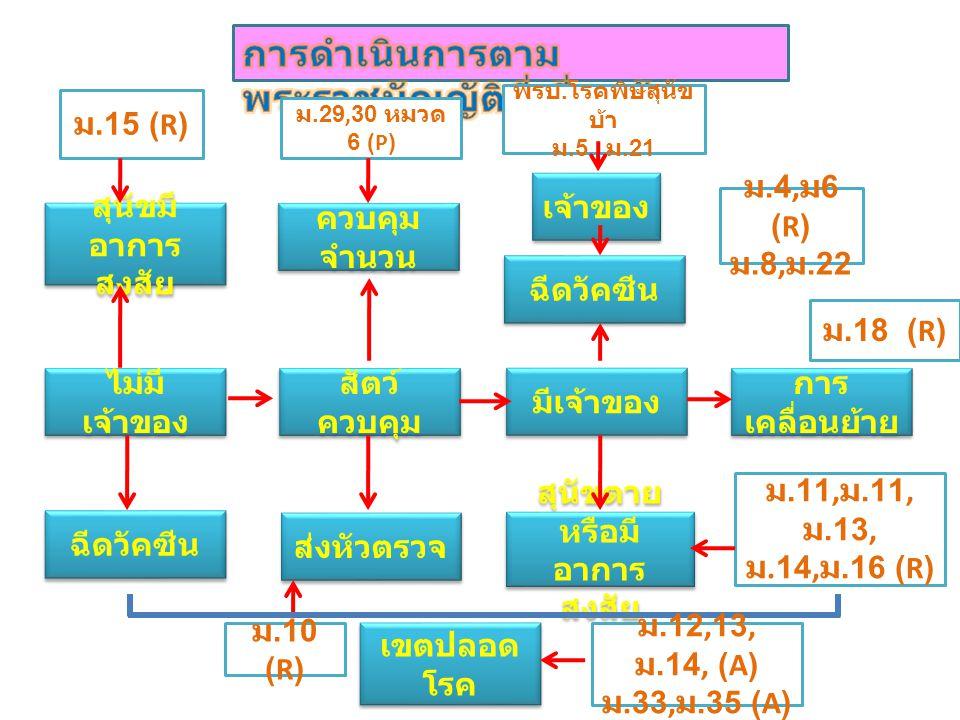 ไม่มี เจ้าของ เจ้าของ ฉีดวัคซีน สุนัขตาย หรือมี อาการ สงสัย การ เคลื่อนย้าย สัตว์ ควบคุม สุนัขมี อาการ สงสัย ควบคุม จำนวน ม.15 (R) ส่งหัวตรวจ มีเจ้าของ ฉีดวัคซีน ม.18 (R) ม.29,30 หมวด 6 (P) ม.4, ม 6 (R) ม.8, ม.22 พรบ.