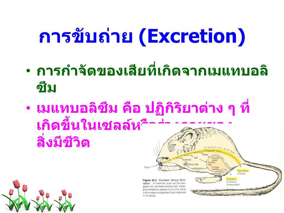 การขับถ่าย (Excretion) การกำจัดของเสียที่เกิดจากเมแทบอลิ ซึม เมแทบอลิซึม คือ ปฏิกิริยาต่าง ๆ ที่ เกิดขึ้นในเซลล์หรือร่างกายของ สิ่งมีชีวิต