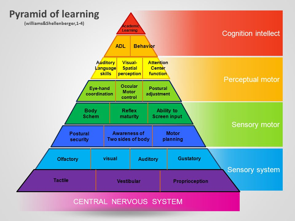 Pyramid of learning (williams&Shellenberger,1-4) Cognition intellect Perceptual motor Sensory motor Sensory system CENTRAL NERVOUS SYSTEM Academic Lea
