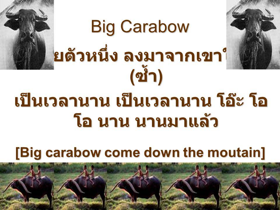 Big Carabow ควายตัวหนึ่ง ลงมาจากเขาใหญ่ ( ซ้ำ ) เป็นเวลานาน เป็นเวลานาน โอ๊ะ โอ โอ นาน นานมาแล้ว [Big carabow come down the moutain] Long time ago lon