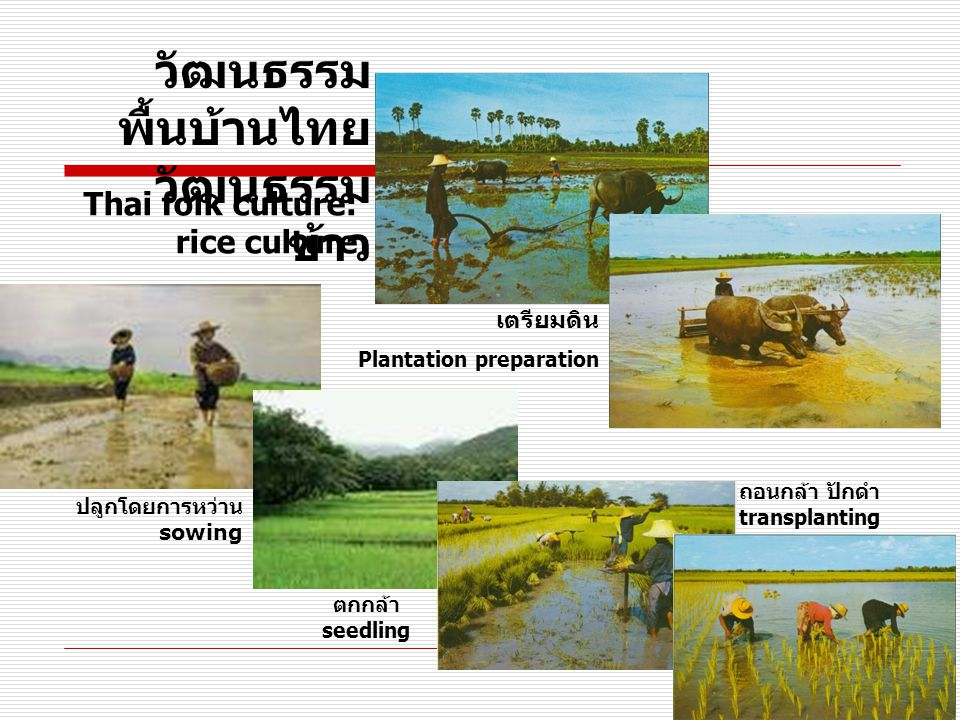 วัฒนธรรม พื้นบ้านไทย วัฒนธรรม ข้าว ปลูกโดยการหว่าน sowing เตรียมดิน Plantation preparation Thai folk culture: rice culture ตกกล้า seedling ถอนกล้า ปักดำ transplanting