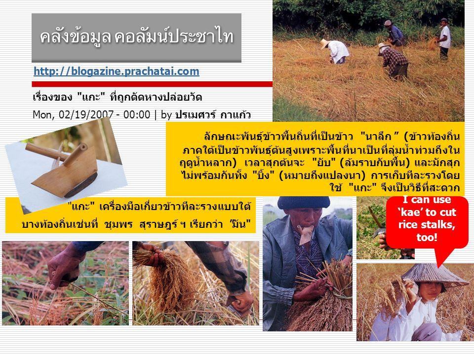http://blogazine.prachatai.com เรื่องของ แกะ ที่ถูกตัดหางปล่อยวัด Mon, 02/19/2007 - 00:00 | by ปรเมศวร์ กาแก้ว แกะ เครื่องมือเกี่ยวข้าวทีละรวงแบบใต้ บางท้องถิ่นเช่นที่ ชุมพร สุราษฎร์ ฯ เรียกว่า มัน ลักษณะพันธุ์ข้าวพื้นถิ่นที่เป็นข้าว นาลึก (ข้าวท้องถิ่น ภาคใต้เป็นข้าวพันธุ์ต้นสูงเพราะพื้นที่นาเป็นที่ลุ่มน้ำท่วมถึงใน ฤดูน้ำหลาก) เวลาสุกต้นจะ ยับ (ล้มราบกับพื้น) และมักสุก ไม่พร้อมกันทั้ง บิ้ง (หมายถึงแปลงนา) การเก็บทีละรวงโดย ใช้ แกะ จึงเป็นวิธีที่สะดวก I can use 'kae' to cut rice stalks, too!