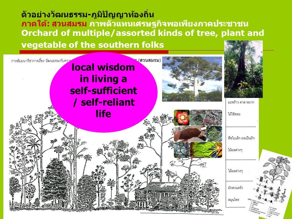 ตัวอย่างวัฒนธรรม-ภูมิปัญญาท้องถิ่น ภาคใต้: สวนสมรม ภาพตัวแทนเศรษฐกิจพอเพียงภาคประชาชน Orchard of multiple/assorted kinds of tree, plant and vegetable of the southern folks local wisdom in living a self-sufficient / self-reliant life