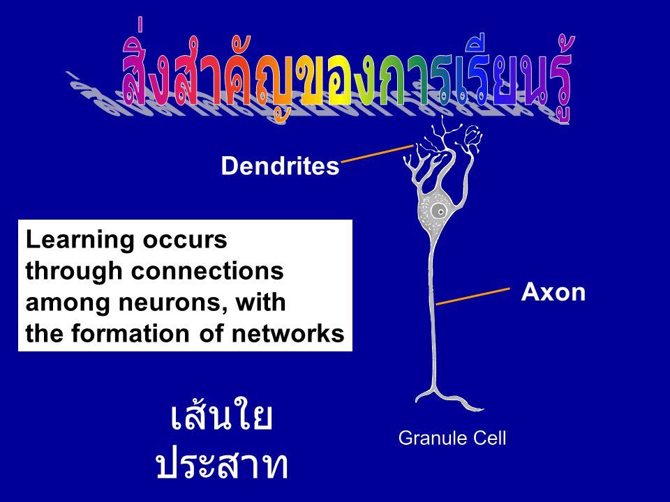 เส้นใย ประสาท Axon Dendrites Learning occurs through connections among neurons, with the formation of networks