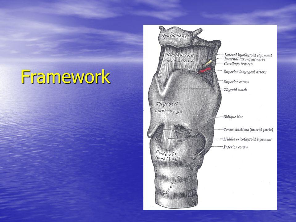 Common laryngeal disorders 1.Acute laryngitis 2. Croup 3.