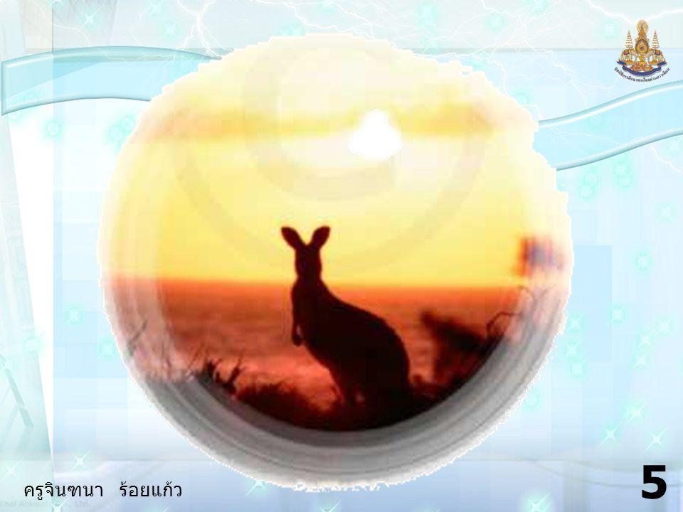 ครูจินฑนา ร้อยแก้ว 25 4.How / feel / when / hit / kangaroo .