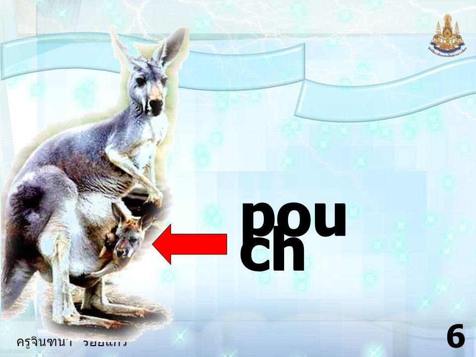 ครูจินฑนา ร้อยแก้ว 26 5.Why / want / photo of the kangaroo .