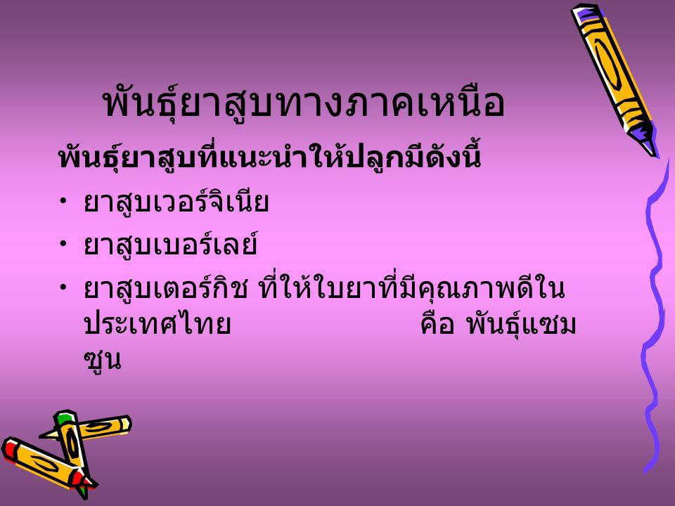 พันธุ์ยาสูบทางภาคเหนือ พันธุ์ยาสูบที่แนะนำให้ปลูกมีดังนี้ ยาสูบเวอร์จิเนีย ยาสูบเบอร์เลย์ ยาสูบเตอร์กิช ที่ให้ใบยาที่มีคุณภาพดีใน ประเทศไทย คือ พันธุ์