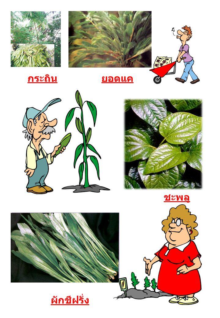4.อาหารที่มีวิตามินซีสูง เช่น ผัก ผลไม้ต่าง ๆ เพื่อป้องกันมะเร็ง หลอดอาหารและกระเพาะอาหาร 5.