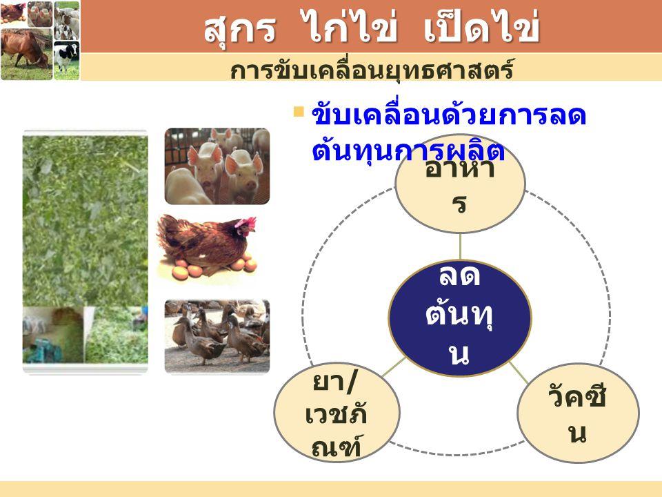 สุกร ไก่ไข่ เป็ดไข่ อาหา ร ยา / เวชภั ณฑ์ วัคซี น ลด ต้นทุ น การขับเคลื่อนยุทธศาสตร์  ขับเคลื่อนด้วยการลด ต้นทุนการผลิต