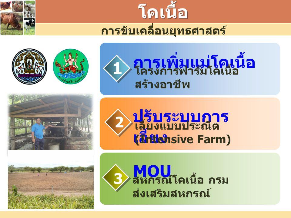 การขับเคลื่อนยุทธศาสตร์โคเนื้อ การเพิ่มแม่โคเนื้อ MOU 1 3 2 ปรับระบบการ เลี้ยง โครงการฟาร์มโคเนื้อ สร้างอาชีพ เลี้ยงแบบประณีต (Intensive Farm) สหกรณ์โ