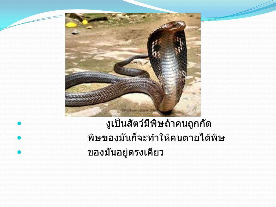 งูเป็นสัตว์มีพิษถ้าคนถูกกัด พิษของมันก็จะทำให้คนตายได้พิษ ของมันอยู่ตรงเคียว
