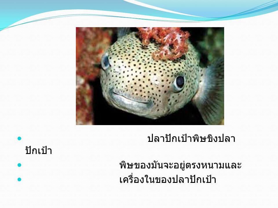 ปลาปักเป้าพิษขิงปลา ปักเป้า พิษของมันจะอยู่ตรงหนามและ เครื่องในของปลาปักเป้า
