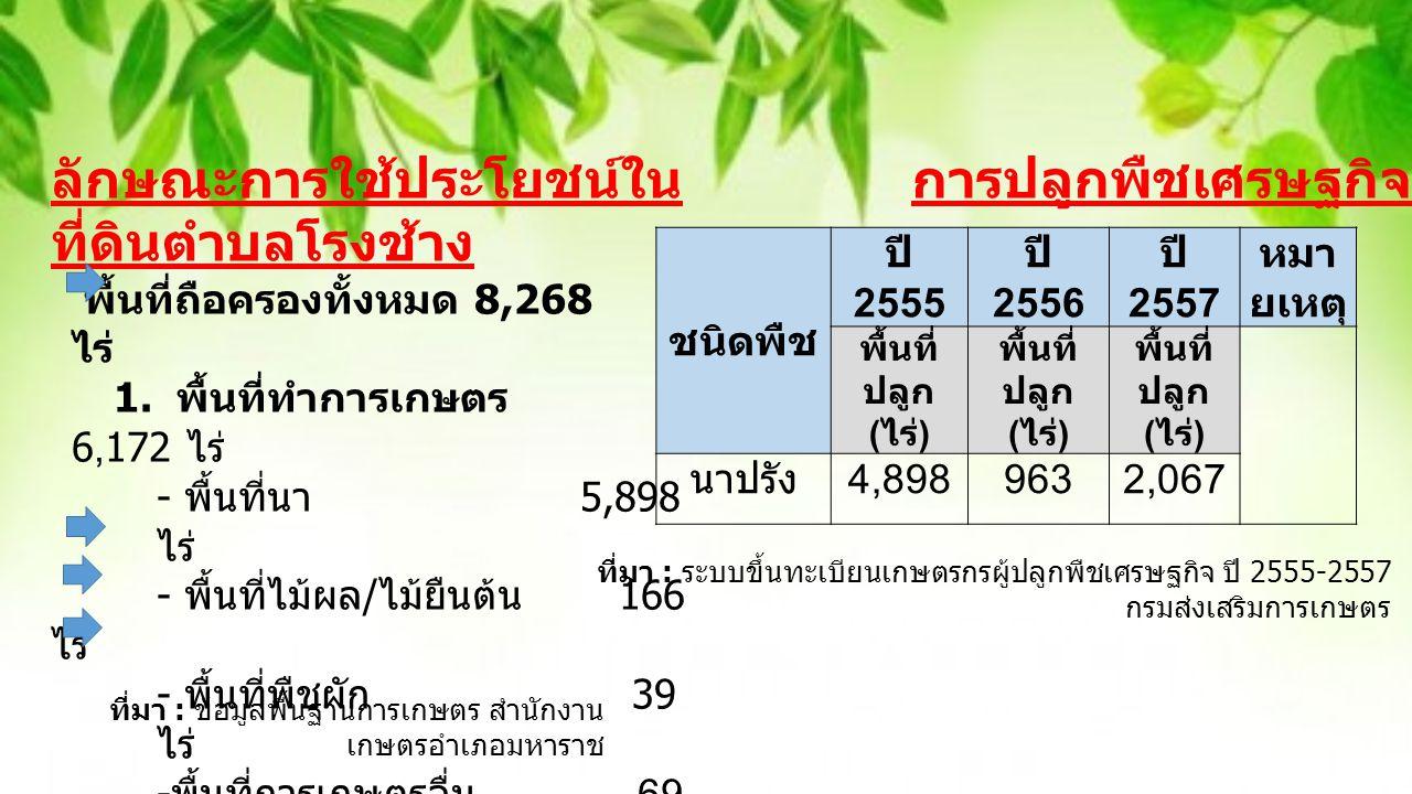 ชนิ ด พืช ปี 2555 ปี 2556 ปี 2557 หมา ย เหตุ พื้นที่ ปลูก ( ไร่ ) พื้นที่ ปลูก ( ไร่ ) พื้นที่ ปลูก ( ไร่ ) นา ปรัง 4,8989632,067 การปลูกพืชเศรษฐกิจ กราฟแสดงสถิติการปลูกข้าวนาปรัง ปี 255-2557 ตำบลโรงช้าง อำเภอมหาราช จังหวัดพระนครศรีอยุธยา
