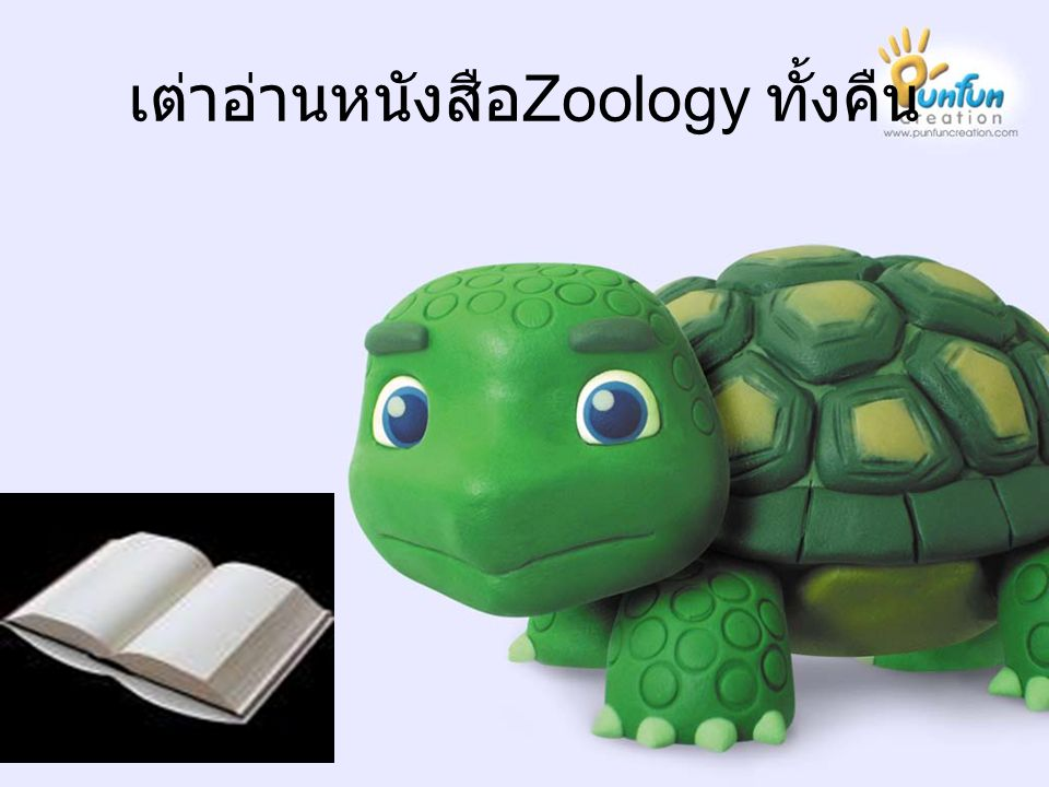 เต่าอ่านหนังสือ Zoology ทั้งคืน