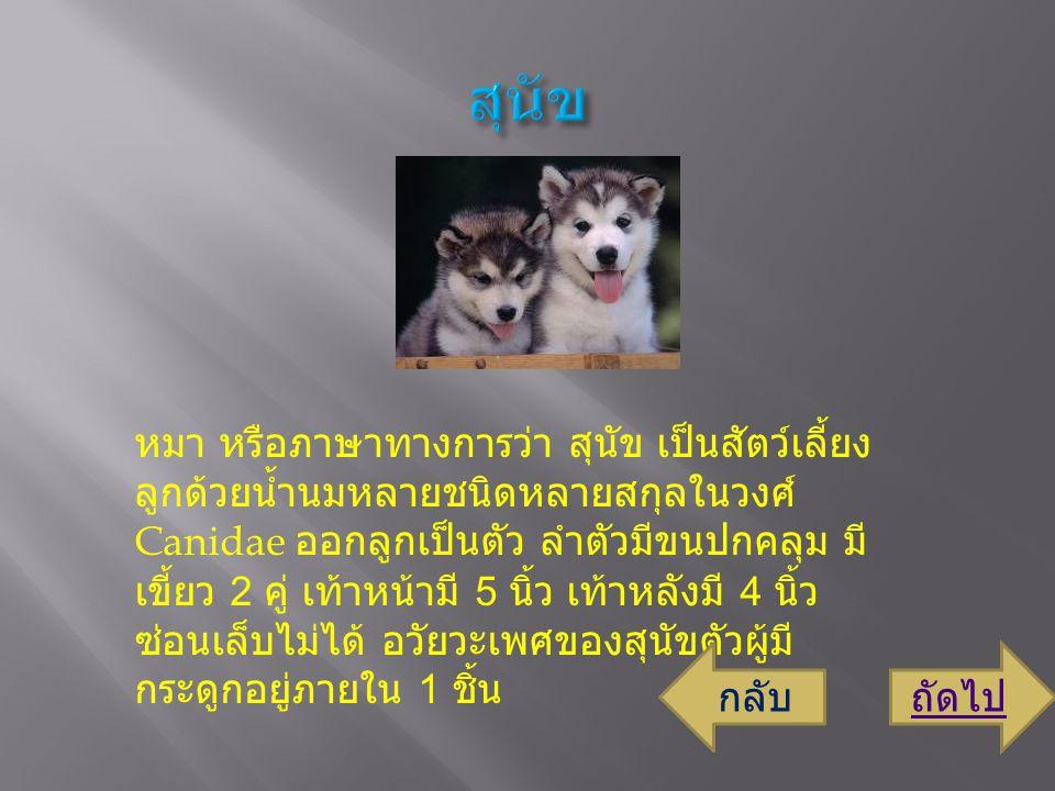 หมา หรือภาษาทางการว่า สุนัข เป็นสัตว์เลี้ยง ลูกด้วยน้ำนมหลายชนิดหลายสกุลในวงศ์ Canidae ออกลูกเป็นตัว ลำตัวมีขนปกคลุม มี เขี้ยว 2 คู่ เท้าหน้ามี 5 นิ้ว เท้าหลังมี 4 นิ้ว ซ่อนเล็บไม่ได้ อวัยวะเพศของสุนัขตัวผู้มี กระดูกอยู่ภายใน 1 ชิ้น ถัดไปกลับ