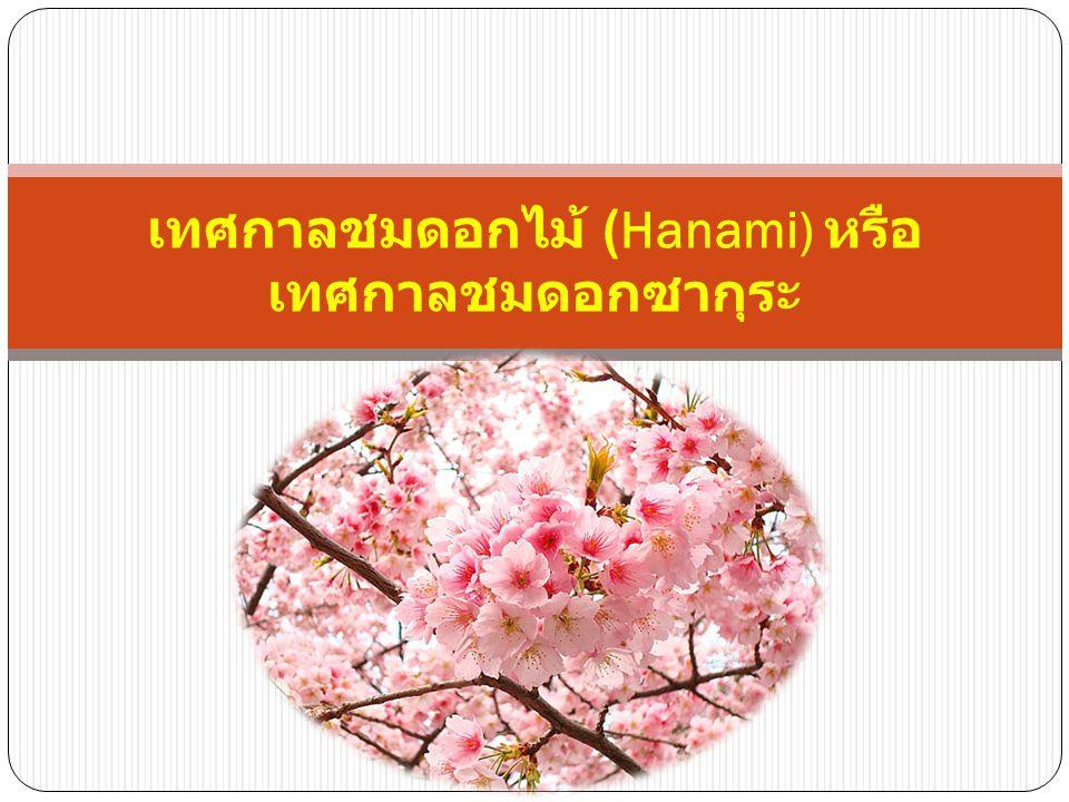 เทศกาลชมดอกไม้ (Hanami) หรือ เทศกาลชมดอกซากุระ