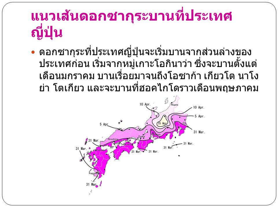 แนวเส้นดอกซากุระบานที่ประเทศ ญี่ปุ่น ดอกซากุระที่ประเทศญี่ปุ่นจะเริ่มบานจากส่วนล่างของ ประเทศก่อน เริ่มจากหมู่เกาะโอกินาว่า ซึ่งจะบานตั้งแต่ เดือนมกรา