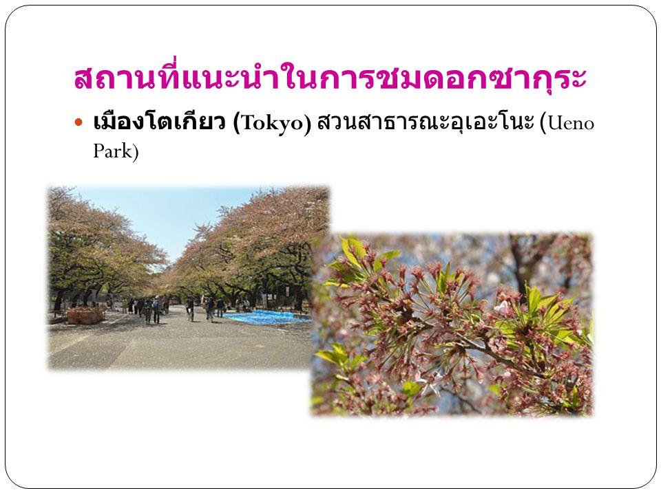 สถานที่แนะนำในการชมดอกซากุระ เมืองโตเกียว (Tokyo) สวนสาธารณะอุเอะโนะ (Ueno Park)