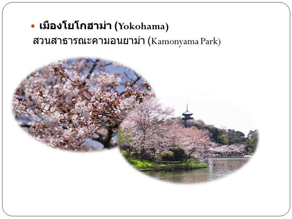 เมืองโยโกฮาม่า (Yokohama) สวนสาธารณะคามอนยาม่า (Kamonyama Park)