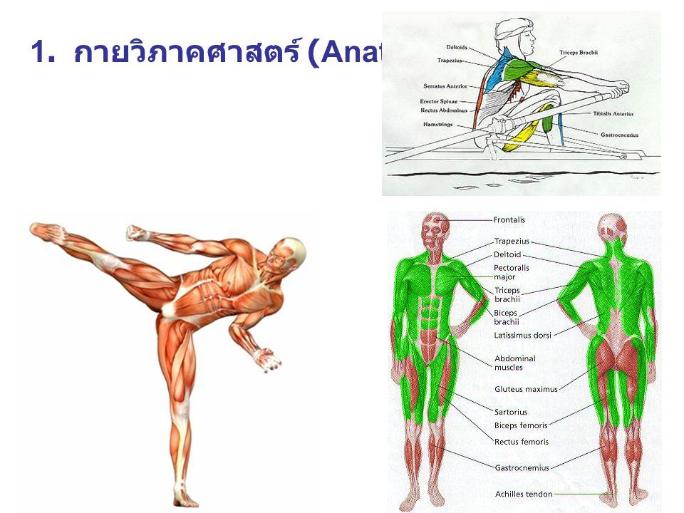 2. สรีรวิทยาการออกกำลัง กาย (Exercise physiology)