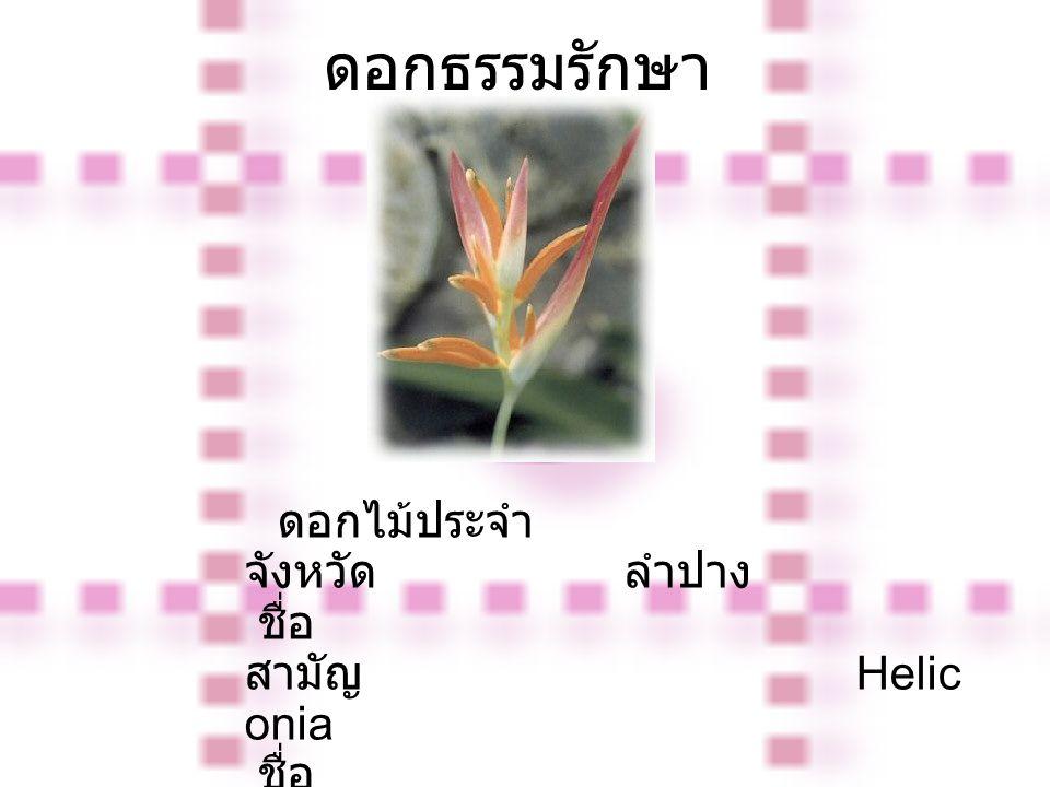 ดอกธรรมรักษา ดอกไม้ประจำ จังหวัด ลำปาง ชื่อ สามัญ Helic onia ชื่อ วิทยาศาสตร์ Helic onia spp.
