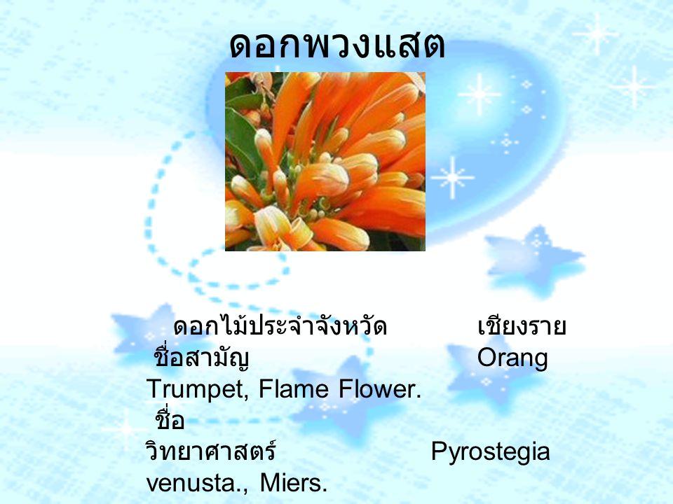 ดอกพวงแสต ดอกไม้ประจำจังหวัด เชียงราย ชื่อสามัญ Orang Trumpet, Flame Flower. ชื่อ วิทยาศาสตร์ Pyrostegia venusta., Miers.