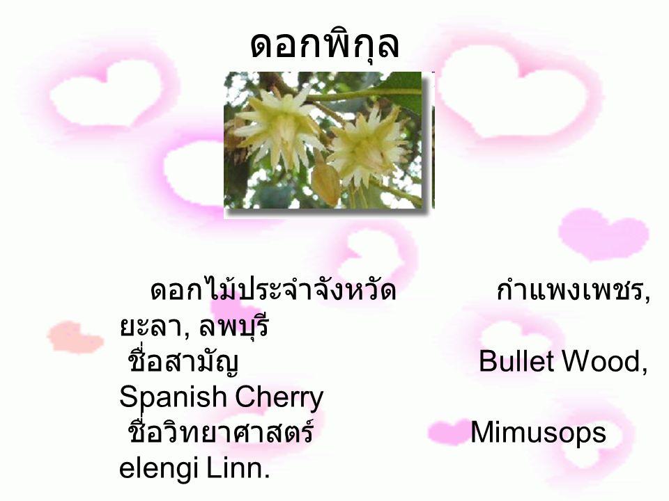 ดอกพิกุล ดอกไม้ประจำจังหวัด กำแพงเพชร, ยะลา, ลพบุรี ชื่อสามัญ Bullet Wood, Spanish Cherry ชื่อวิทยาศาสตร์ Mimusops elengi Linn.