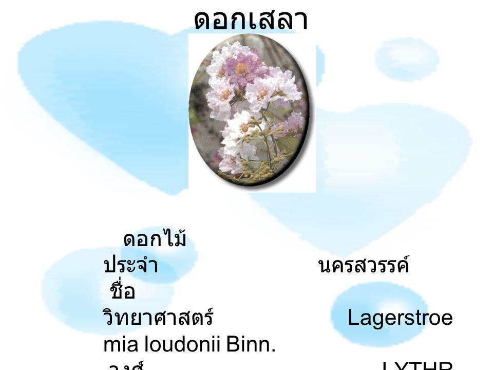 ดอกเสลา ดอกไม้ ประจำ นครสวรรค์ ชื่อ วิทยาศาสตร์ Lagerstroe mia loudonii Binn. วงศ์ LYTHR ACEAE