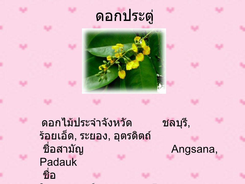 ดอกประตู่ ดอกไม้ประจำจังหวัด ชลบุรี, ร้อยเอ็ด, ระยอง, อุตรดิตถ์ ชื่อสามัญ Angsana, Padauk ชื่อ วิทยาศาสตร์ Pterocarpus indicus Willd