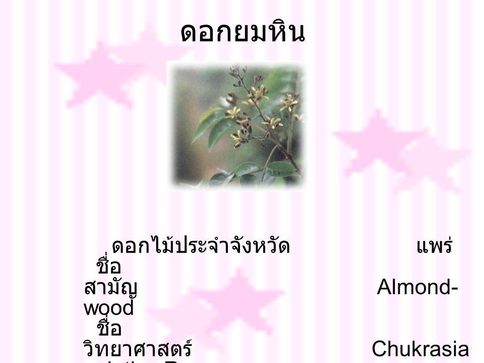 ดอกยมหิน ดอกไม้ประจำจังหวัด แพร่ ชื่อ สามัญ Almond- wood ชื่อ วิทยาศาสตร์ Chukrasia velutina Roem.