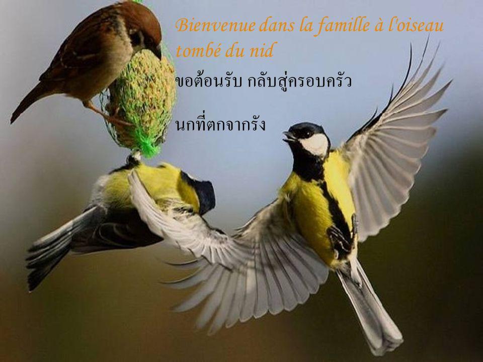 Bienvenue dans la famille à l oiseau tombé du nid ขอต้อนรับ กลับสู่ครอบครัว นกที่ตกจากรัง